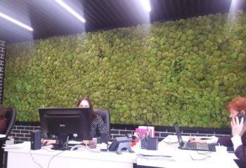Зеленая стена для «Меридиан констракшн» из кочкового стабилизированного мха