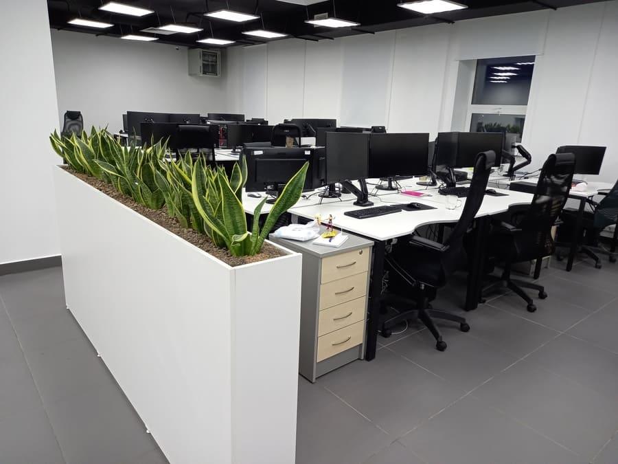 Зонирование пространства компании «Е-Софт» живыми цветами
